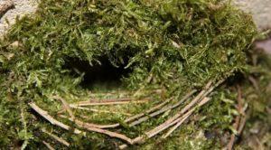 materiales aportados al nido-musgo_o