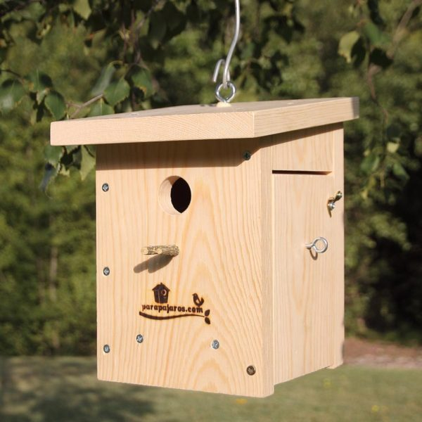 Caja nido con ventana de cristal, caixa niu amb vidre lateral per inspecció,nest box with side glass for inspection, kabi kutxa beirazko leihoarekin