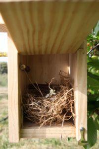 Caja nido Alpina Cp20 con nido_o
