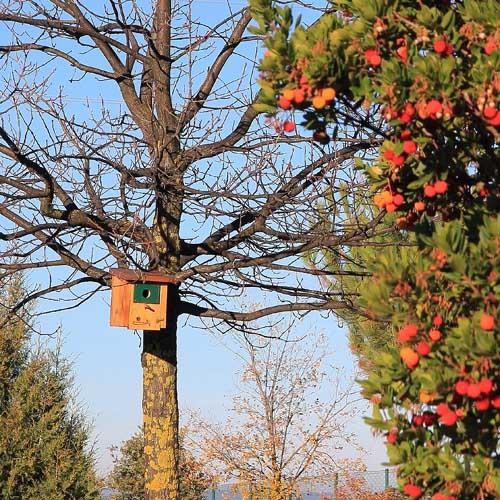 madroño y caja nido para páridos.Caixa niu per ocells