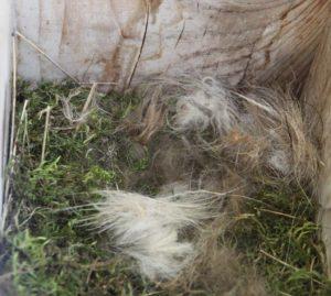 caja con nido con material aportado Cp10_parapajaros_o