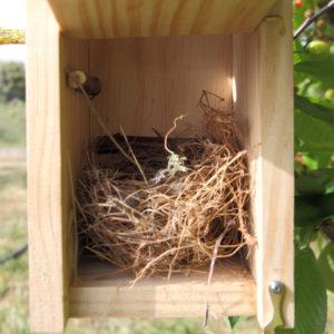 Caja nido Alpina para pequeños páridos