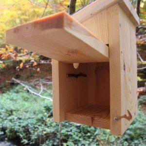 Detalle de la puerta en interior de caja nido Pirineos
