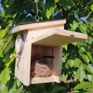 Interior caja nido Pirineos con nido en construcción