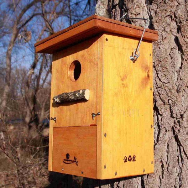 Caja-nido-autillo-europeo-Moucho-de-orellas-Xot-Apo-hontza-Eurasian scops owl