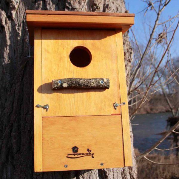 Caja-nido-autillo-europeo-Moucho-de-orellas-Xot-Apo-hontza-Eurasian scops owl.Caja nido abubilla, Bubela, Puput, Argi-oilarra, Hoopoe,