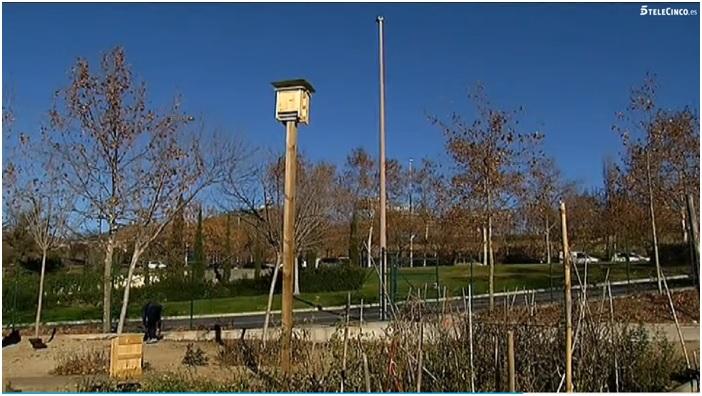 Cajas nido CM11 colocadas en postes
