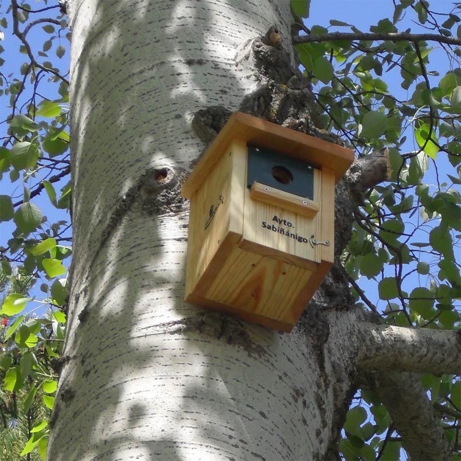 caja-nido-herrerillos-carboneros-CP18-parque-de-Sabiñanigo_procesionaria