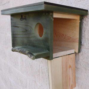 caja nido cernícalo, caixa niu xoriguer, kabi kutxa belatz, caixa de niño lagarteiro, nest box common kestrel