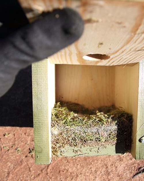 5.2 Cuidados y mantenimiento de cajas nido