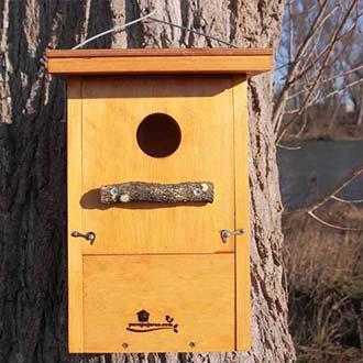 Caja nido Mochuelo europeo Cp82