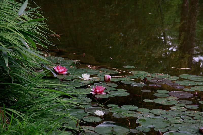 Un estanque con agua o un bebedero serán un gran atractivo para las aves.