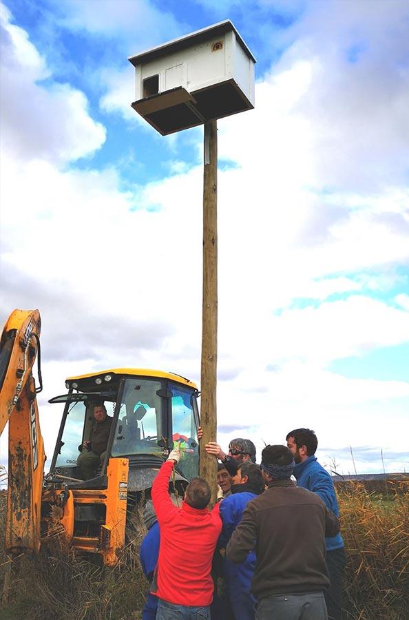 Colocación de cajas nido de murciélagos, lechuza y aves insectívoras por agricultores de la Denominación de Origen Protegida Peras de Rincón de Soto