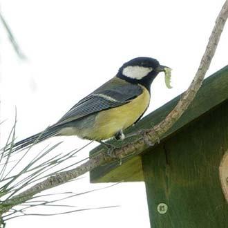 Aves insectívoras, rapaces y murciélagos auténticos reguladores biológicos de pagas