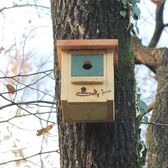 Caja nido aves insectívoras Cp18 clavada con clavos forestales en robledal