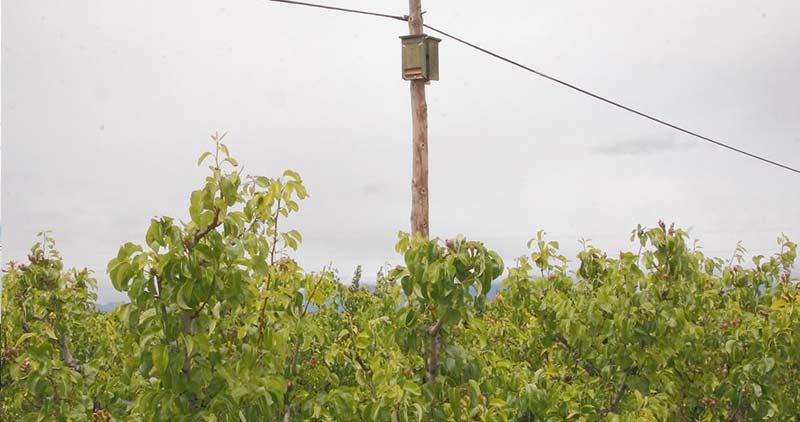 Cajas nido de murciélagos cm13 en frutales