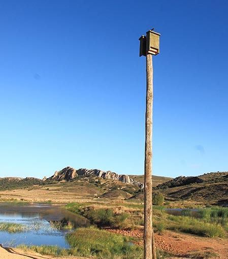 Cajas nido de Murciélagos Cm13 colocadas en poste