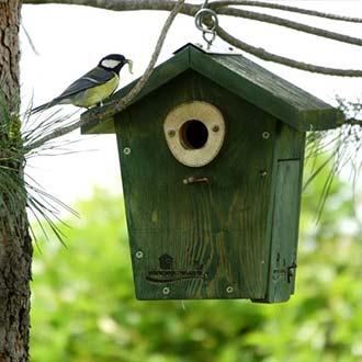 Carbonero dando de comer a las crías en una caja nido CP30