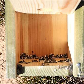 Excrementos en cajas nido