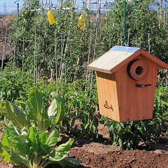 Huerta urbana utilización de cajas nido y trampas cromáticas
