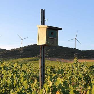 Ventajas de la regulación biológica de plagas en agricultura ecológica y producción integrada