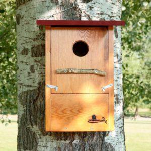 Caja nido para Abubilla, caixa niño Bubela, caixa niu Puput, kabi kutxa Argi-oilarra, nest box Hoopoe