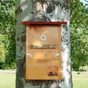 Caja nido para Pito real, caixa niño Peto verde, caixa niu Picot verd, kabi kutxa Okil berdea , nest box European green woodpecker