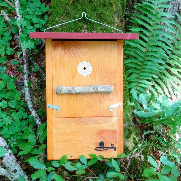 Caja nido para Pico picapinos, caixa niño Peto real, caixa niu Picot garser gros, kabi kutxa Okil handia