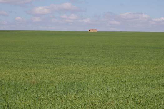 Simplificación del paisaje