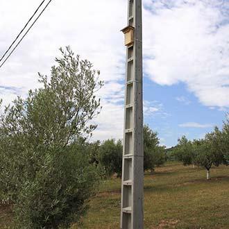 Caja nido de murciélagos Cm12colocada en poste con sobre-tejado de capa lacada