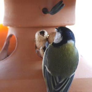comedero, menjadora, Hegaztientzako jantokia, alimentador de aves, bird feeder