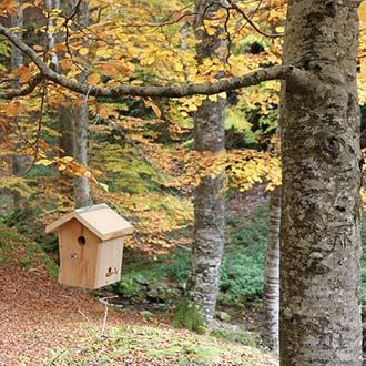 Caja nido Cp30 colocada en la rama de un árbol con colgador